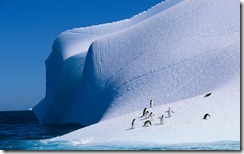 Gentoo and Chinstrap Penguins on Iceberg, Antarctica