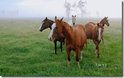 Small group of horse in New South Wales, Australia