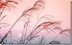 落日时的草,中国广西 (Grass at Sunset on Mountain Slope in Guangxi, China)