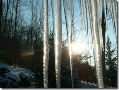 sunrise through icicles