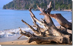 अंडमान का समुद्री तट Andaman Beach, The Union Territory of Andaman & Nicobar Islands