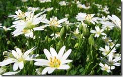Blooming flowers , Průhonice Park