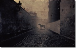 Horse on Cobbled Street, Prague, Czech Republic