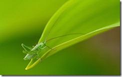 Grasshopper in Biebrza Nature Reserve, Poland