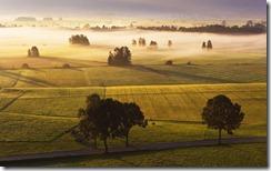 Morgennebel über dem Anger bei Grossweil, Deutschland (Early Morning Mist Above Meadow, Grossweil, Germany)