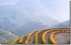 Rice growing on terraced fields on mountain slopes, Longsheng, China