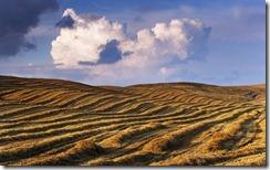 Harvested field, Tuscany, Italy