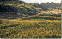 Terraced rice field, Nagano Prefecture, Japan