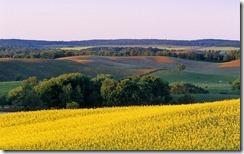 Farmland with canola in foreground, Tiger Hills, Manitoba, Canada