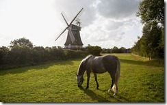 Horse on pasture, windmill in background, Oldsum, Foehr, Schleswig-Holstein, Germany