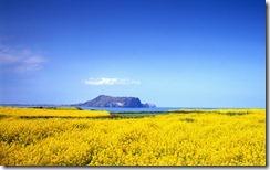 제주도 봄 (Spring on Jeju Island)