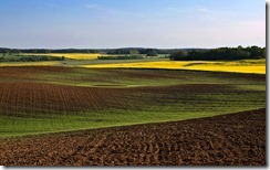 Tīrums pavasarī, Tukuma rajonā, Latvijā (Pasture during spring, Tukums region, Latvia)