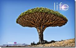 2-life-tree