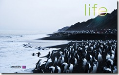4-life-penguins