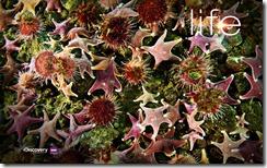 5-life-starfish
