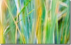 Grass 01