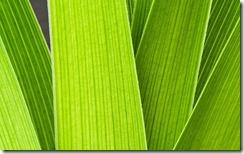 Leaf 62