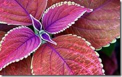 Leaf 33