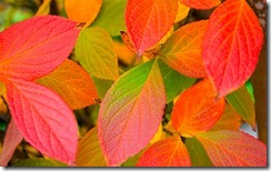 Leaf 38