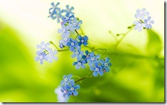 Flower 41