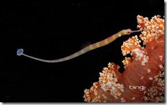 bingdynamicpipefish