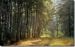 Las we wschodniej części  Polski (A Polish wood in the eastern part of the country)