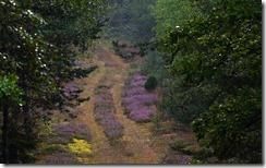 Jesienne wrzosy (Autumn heathers)