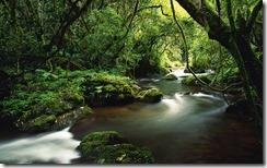 Stream Running Through a Forest Near Sabie, Mpumalanga