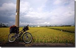 台東市郊稻田 (The Rice Fields at Taitung City)