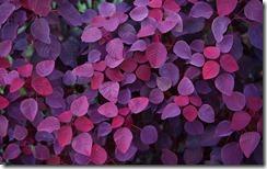 咖啡店花園的植物 (Plant in a cafe's garden)