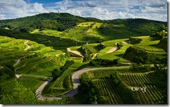 Vineyards and windy roads in the Kaiserstuhl region of Germany