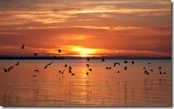 sunsetonthewaterwindowsbackground
