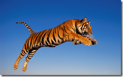 bengaltigerwindowsdesktopbackground
