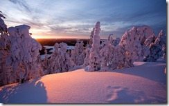 Snow-covered trees in Kuusamo, Lapland, Finland