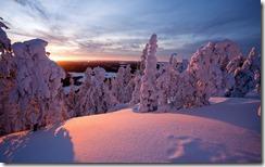 Snow-covered trees in Kuusamo, Lapland, Finland