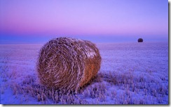 Wheat straw bale in a snowy field at dawn, North Dakota, United States