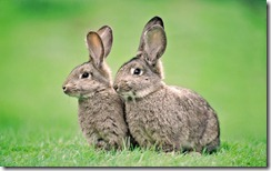 Two Rabbits, Outdoors