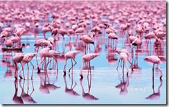 pinkflamingosdesktopbackground
