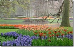 Hyacinth and tulip garden, Keukenhof Gardens, Lisse, Netherlands