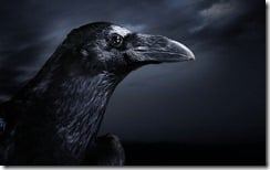 Profile of a Crow