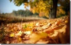 Autumn Leaves, Hanau, Germany