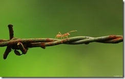 Ant on a balancing journey