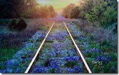 Texas bluebonnets on railroad tracks, Texas