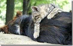 Sleeping cat on a sleeping dog