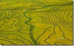 Aerial view of maturing rice fields, Uruguay