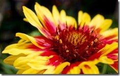 Bright orange and yellow flower