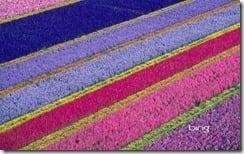 Flower farm in Lompoc, California