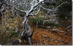 Small tree hidden in the wilderness of Arizona