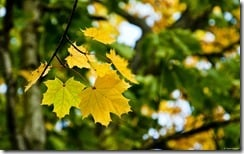 Foliage near Fenway Park, Boston, Massachusetts, U.S.