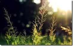 Rays of sunlight through grass